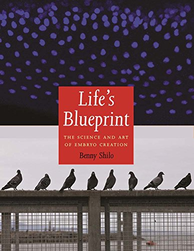 Life's Blueprint: The Science and Art of Embryo Creation