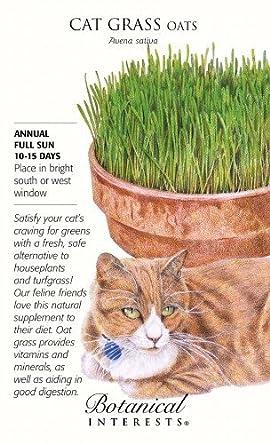Cat Grass (Oats) Seeds - 45 grams