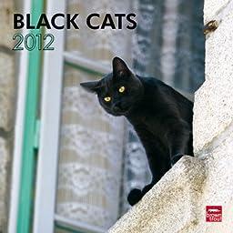 Black Cats 2012 Square 12X12 Wall Calendar