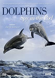 Dolphins Spy in the Pod [DVD]