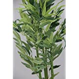 Homescapes - 2 - 3 Feet Bamboo - Potted - Real Wood Stems and Lifelike Leaves - Artificial Replica Plant - Suitable for Home or Officeby Homescapes