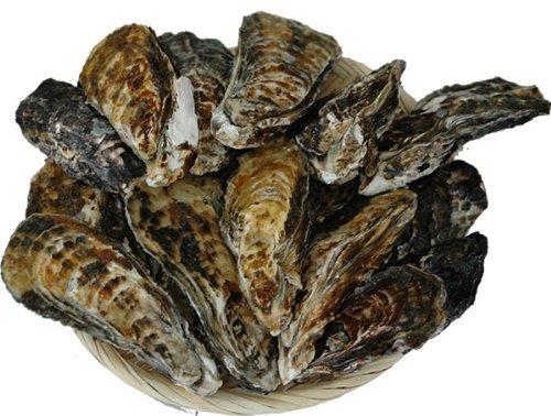 浜中水産 兵庫県相生産 殻付き牡蠣 5kg