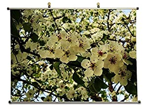 Amazon.com: primavera em meu corao - Canvas Wall Scroll Poster with