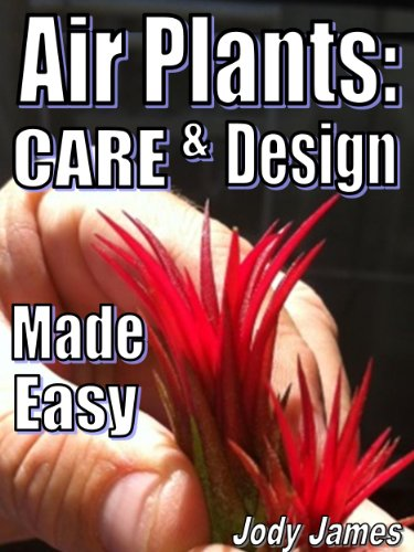 air-plants-care-and-design-made-easy