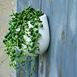 Celestte Succulent Planter, Mini Round White Ceramic Hydroponic Wall-mounted Flower Pots
