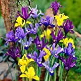 Specie Iris Bulbs Mix