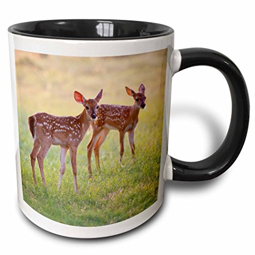 3dRose mug_191374_4 White Tailed Deer, Odocoileus Virginianus, Fawn, Texas, USA Two Tone Black Mug, 11 oz, Black/White