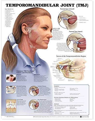 Temporomandibular Joint (TMJ) Anatomical Chart - 1