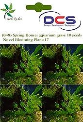 DCS (048) Spring Bonsai aquarium grass 10 Seeds Novel Blooming Plant-17
