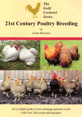 21st-century-poultry-breeding