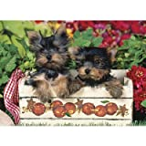 (19x27) Just Yorkies 1000 Piece Jigsaw P...