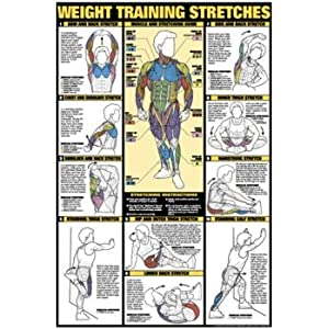 Weight Training Stretches 24