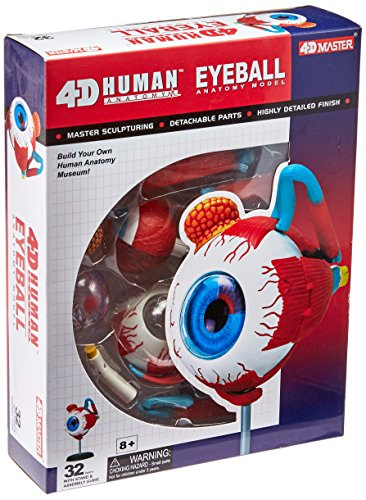 Tedco Human Anatomy - Eyeball Anatomy Model (Medical Models compare prices)