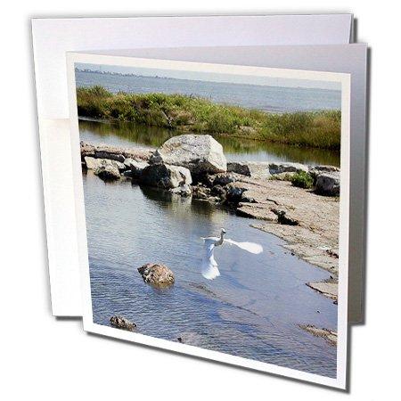 Beverly Turner Photography - Large White Egret Flying on the Coast - 1 Greeting Card with envelope (gc_11892_5)