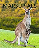 "Bestselling children's author Kay de Silva presents ""Marsupials."" The book uses captivating illustrations and carefully chosen words to teach children about ""the pouched mammal."" This series is known for its beautiful full-color images. The descripti..."