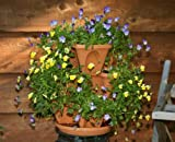 Nancy Janes P1360 12-inch original Stacking Planters with Patented Flow through Watering System and Hanging Chain - Vertical Gardening - Vegetable Planting - With Tray - Includes grids - Multiple pots - Food Grade Poly Propolene