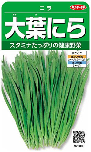 サカタのタネ 実咲野菜3890 大葉にら ニラ 00923890