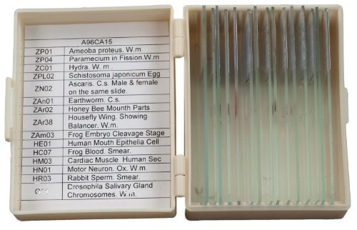 Omax 15 Prepared Slides With Storage Box In Zoology And Histology