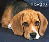 For the Love of Beagles 2007 Deluxe Calendar (Multilingual Edition)