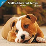 Various Staffordshire Bull Terrier Puppies Traditional 2014 Wall Calendar
