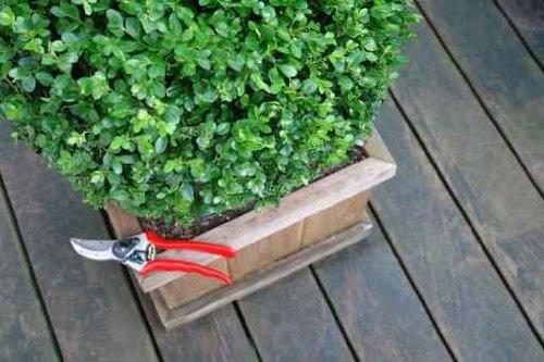 Gardening - 30