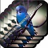 Budgerigar (BLUE Budgie) BIRD Glossy SET OF 4 WOODEN COASTER 5