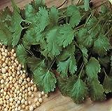 Organic Herb Seed - Coriander - Cilantro - 600 Seeds