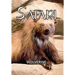 Safari Wolverine
