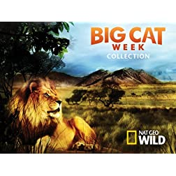 Big Cat Week Collection Season 1
