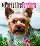 BrownTrout Yorkshire Terriers 2014 Desk Diary