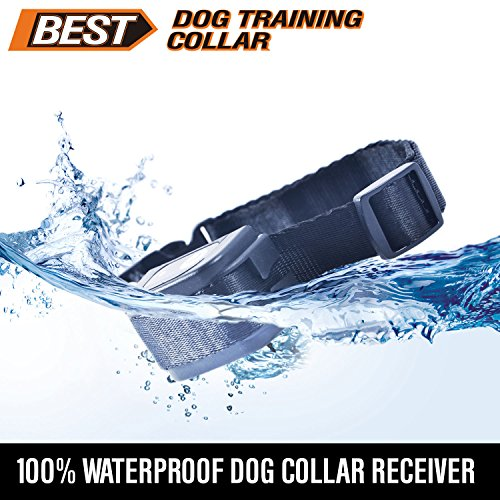 Shock Collar Voltage For Dogs