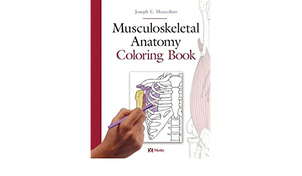 Buy Musculoskeletal Anatomy Coloring Book Book Online at Low ...