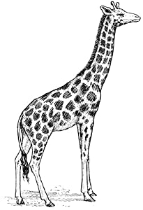 Amazon.com - Pack of 12 Parchment Gift Tags Line Drawing Giraffe