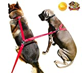Two Dog Double Leash Adjustable - 8ft Dual Dog Lead Red with Soft Padded Handle for Comfort - Tangle Free - 2 Dogs 1 Leash