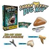 Kit  de excavacion especímenes de tiburón dientes reales