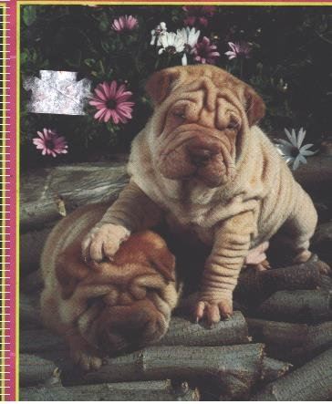 "Bully - Mini Puzzle Side Kick - 7"" X 9"" 100 Pieces"