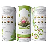Teabloom Flowering Green Teas - 12 Natural Jasmine Blooming Tea Flowers Gift Set
