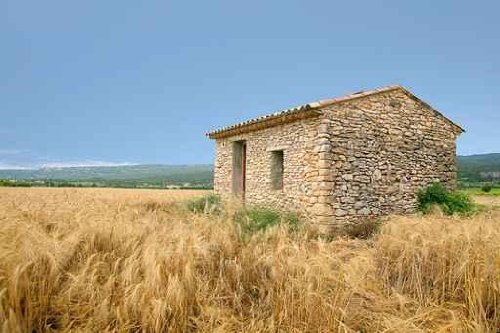 Shed and Wheat Fields - 72