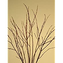 Green Floral Crafts Dried Fintail Pussy Willow - Various sizes 3 - 6 ft. Tall