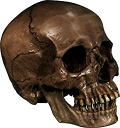 Authentic Life Size Replica Aged Relic Human Skull Reproduction in Crypt Dust Grey color, by Nose Desserts