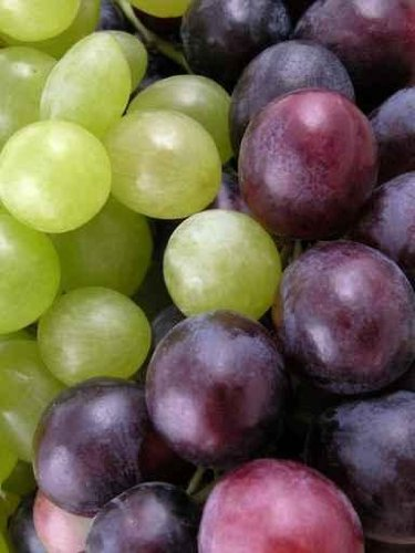 Food Wall Decals Grapes - 18 Inches X 14 Inches - Peel And Stick Removable Graphic