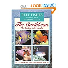Reef Fishes Corals and Invertebrates of the Caribbean : A Diver's Guide