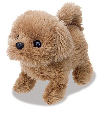 Toy poodle babies series