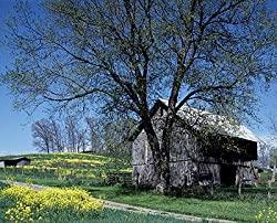 Barn in the Country in Springtime - Charming 16x20-inch Photographic Print by Carol M. Highsmith