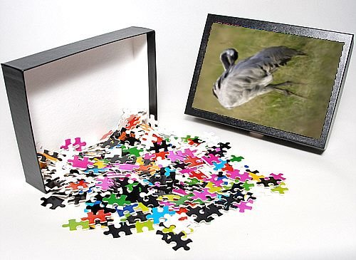 Photo Jigsaw Puzzle of Common Crane - bird grooming