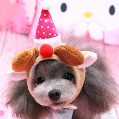 Alfie Pet By Petoga Couture - Qeno Deer Hat Party Costume (For Small Dogs & Cats) - Color: Brown, Size: Small front-853411