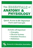 Anatomy and Physiology Essentials (Essentials Study Guides)