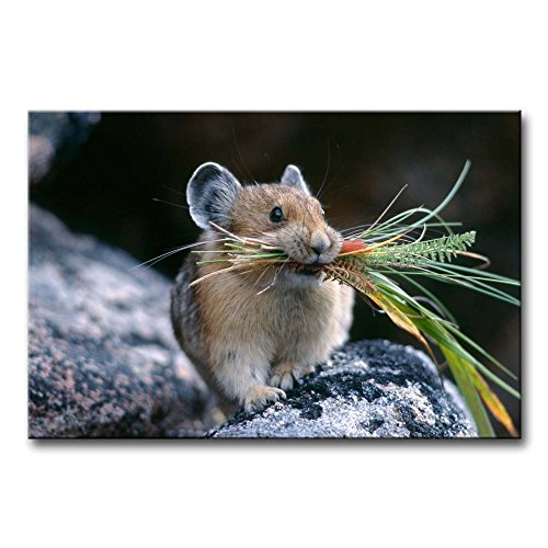 Wall Art Painting Mouse Chewing The Leaves Pictures Prints On Canvas Animal The Picture Decor Oil For Home Modern Decoration Print For Decor Gifts