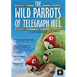 The Wild Parrots of Telegraph Hillby Mark Bittner