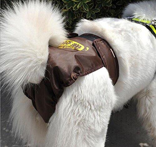 Glield Mutandina per Cani , Maschio Pet Dog Salute Pant Diaper Puppy Sanitario Intima per I'incontinenza Urinaria e per I'addestramento in Casa, Coffee - L (waist 56cm-72cm) PTK01